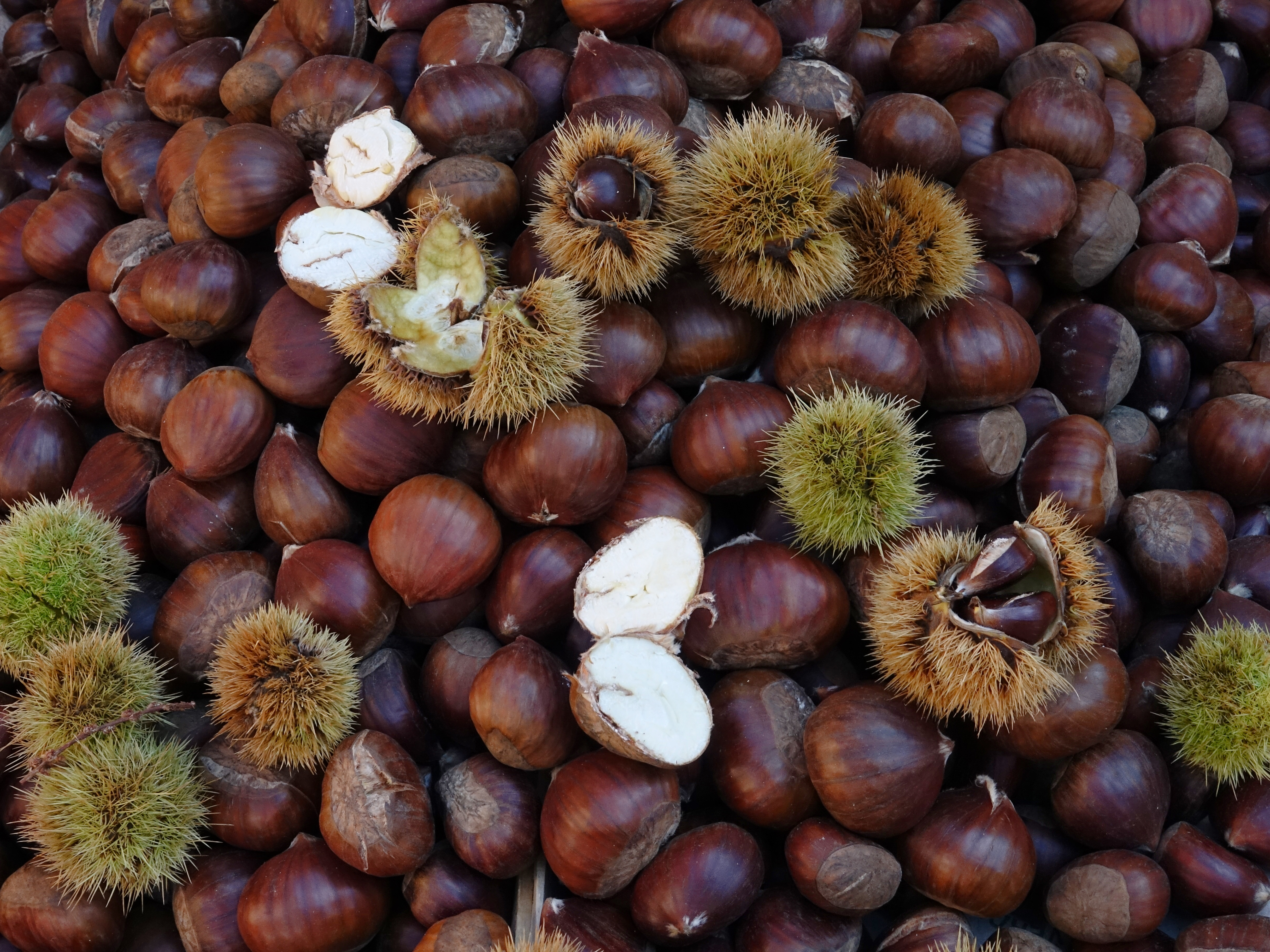 Delicious chestnuts, we ate these daily at the roasting stands which came alive every evening