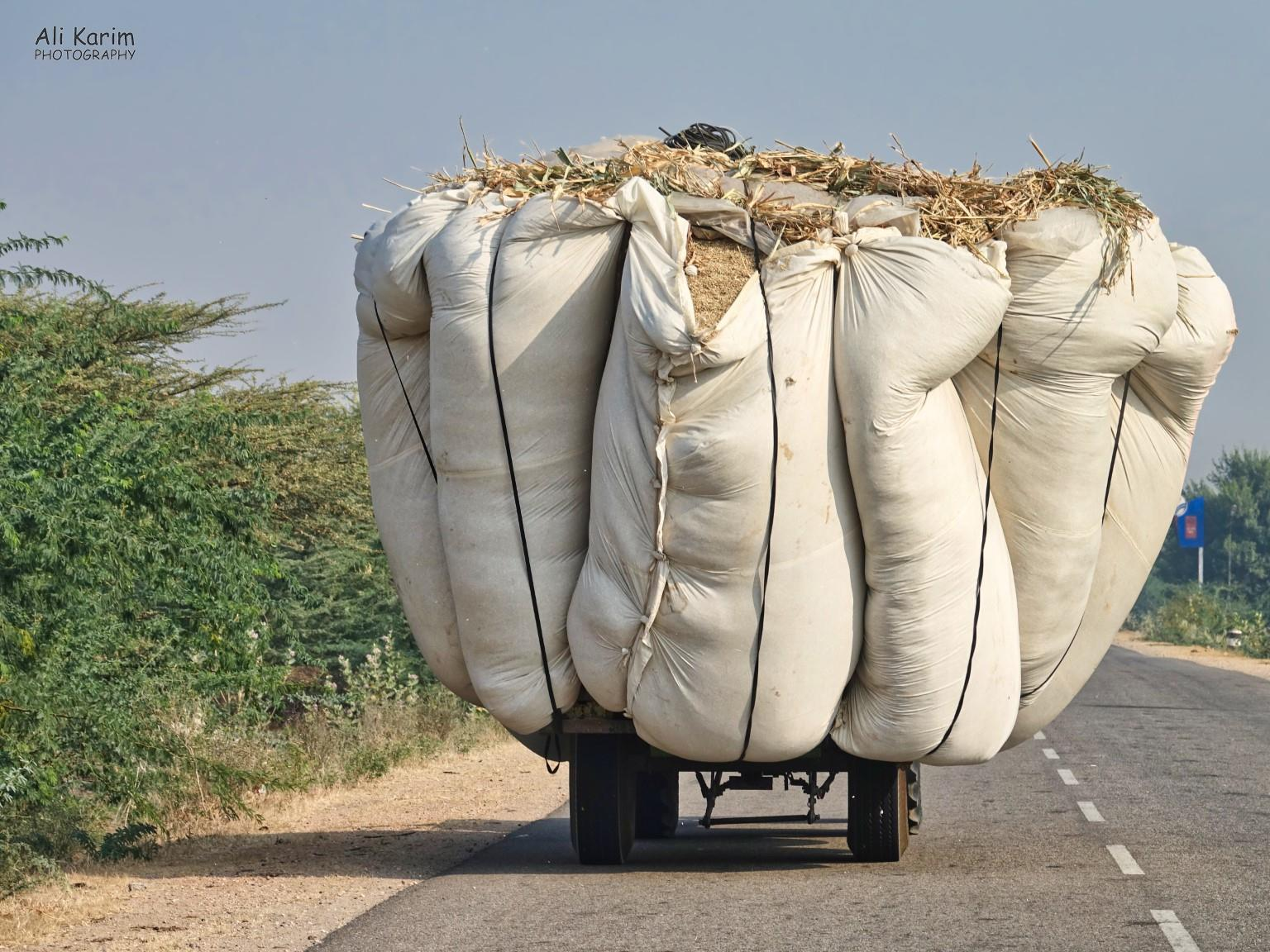 Bikaner, Rajasthan Transporting hay/grains