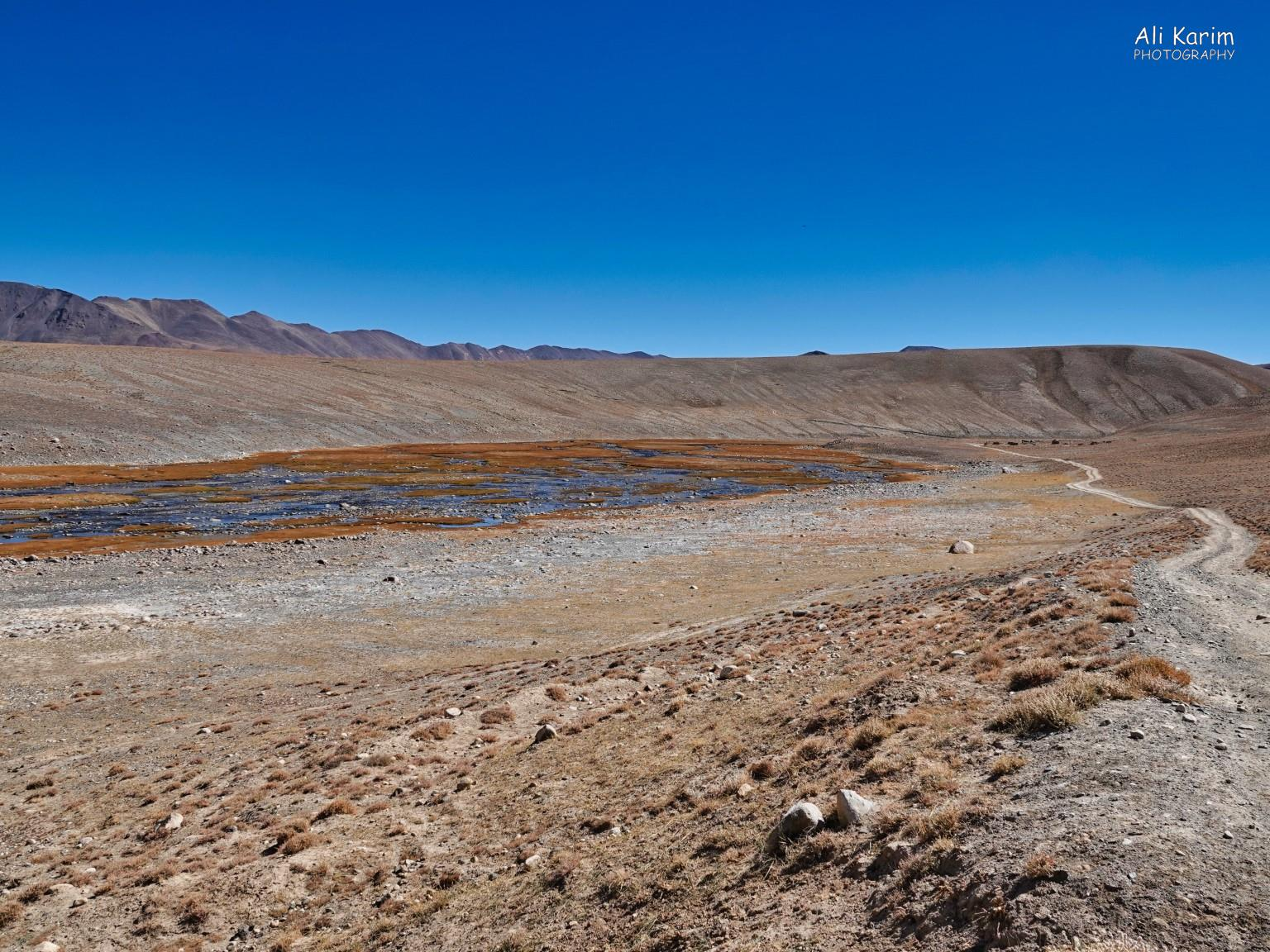More Murghab & Alichur, Tajikistan, Infrequent sightings of water in a basin