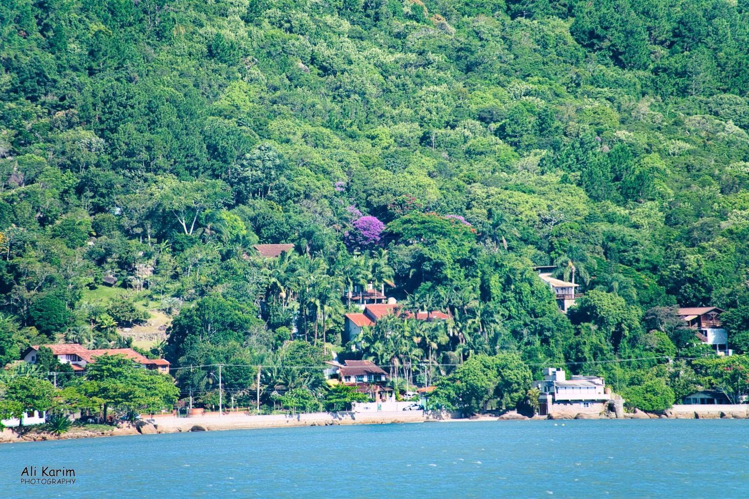 Florianópolis, Brazil I loved this view of the purple tree on the hillside