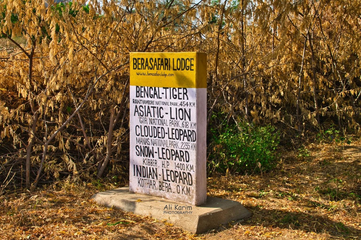 Leopards, Bera, Rajasthan Bera Safari Lodge