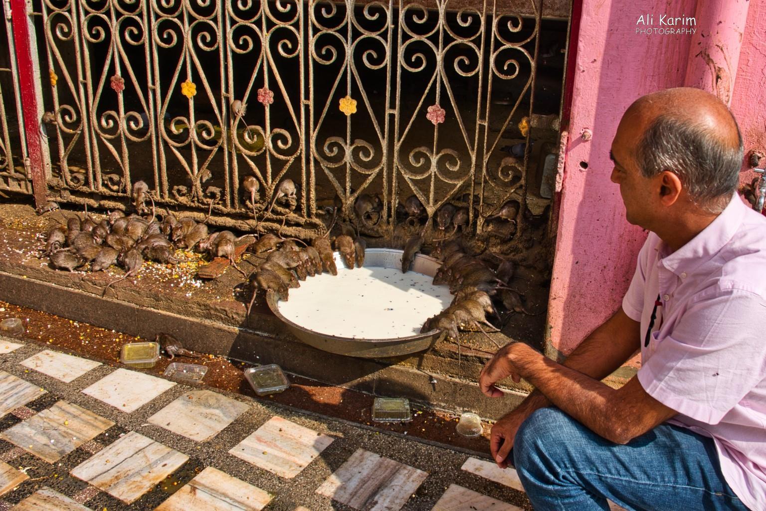 Bikaner, Rajasthan Delicious milk