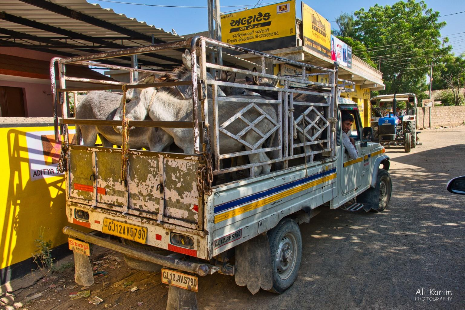 Bhuj, Kutch, Gujarat Modes of transportation; donkeys and trucks