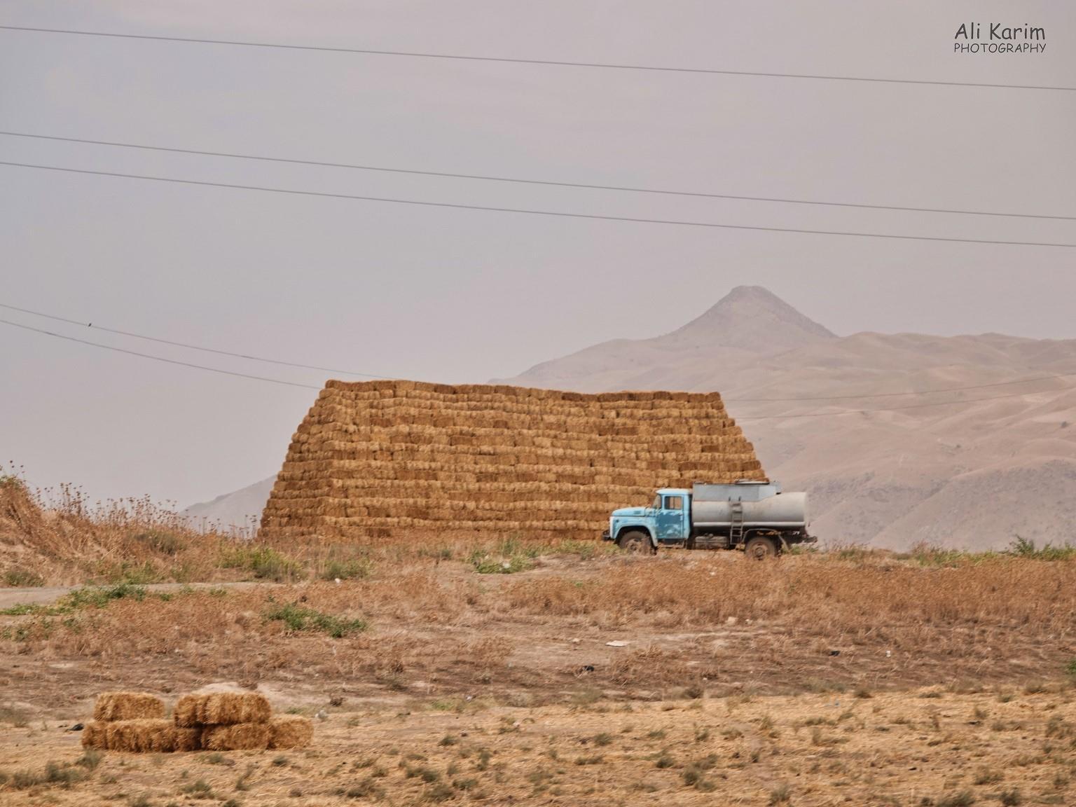 Dushanbe, Tajikistan Lots of farming; making hay while the sun shines