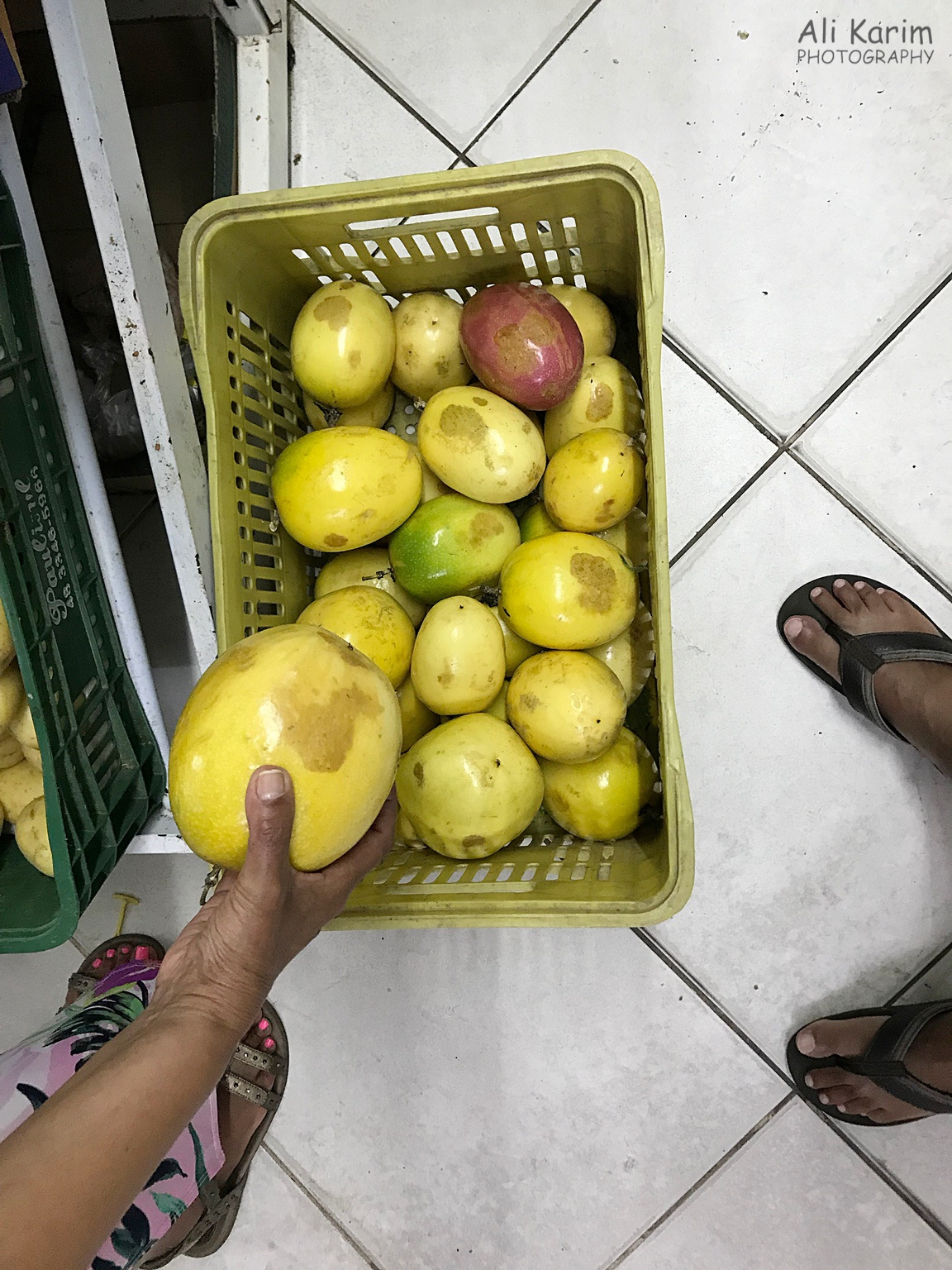 Florianópolis, Brazil Check out the size of the passion fruit