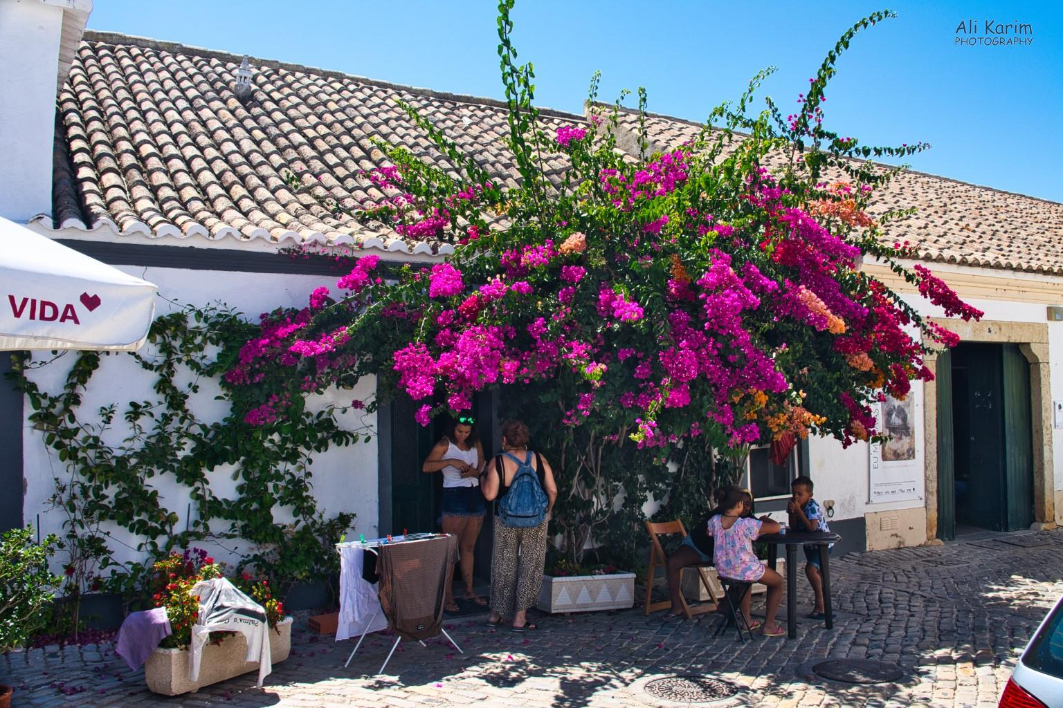 Algarve, Portugal Beautiful Bougainvillea in Faro