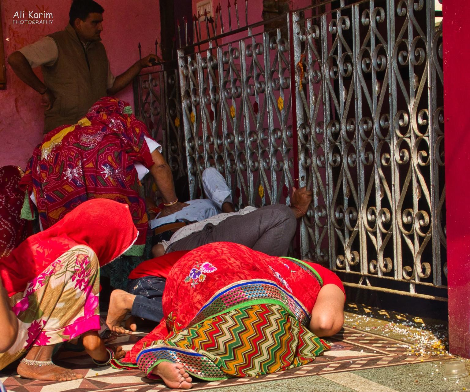 Bikaner, Rajasthan Devotees on hands and knees trying to spot the elusive white rats