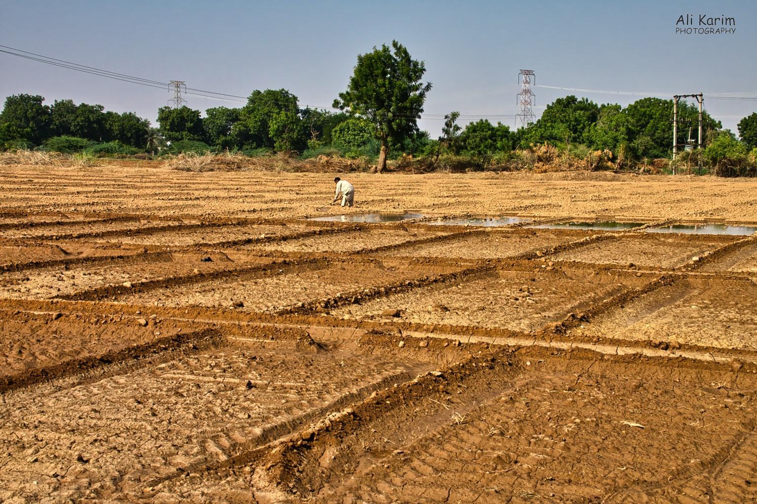 Bhuj, Kutch, Gujarat Crop farming