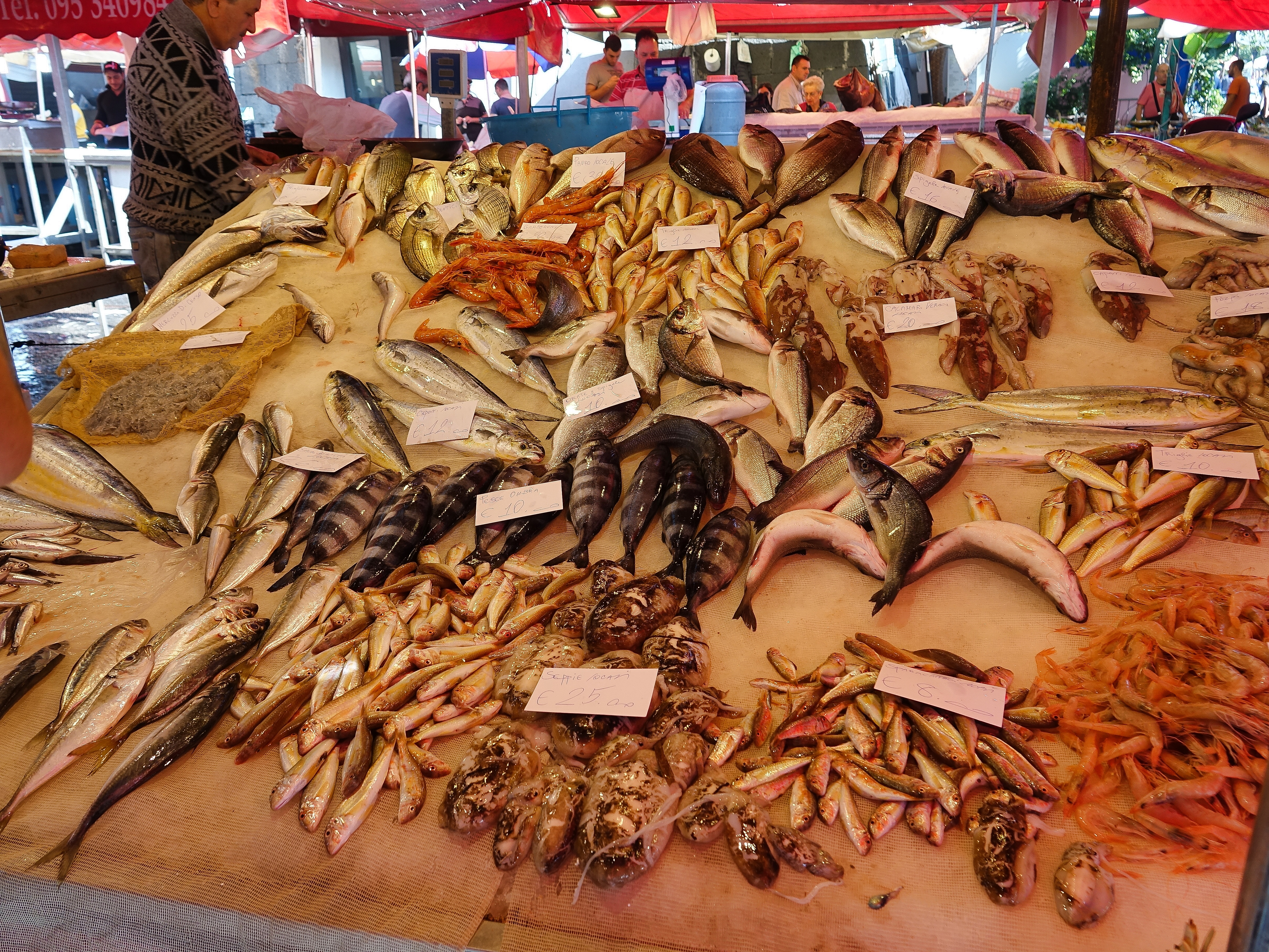 Feast of fresh seafood