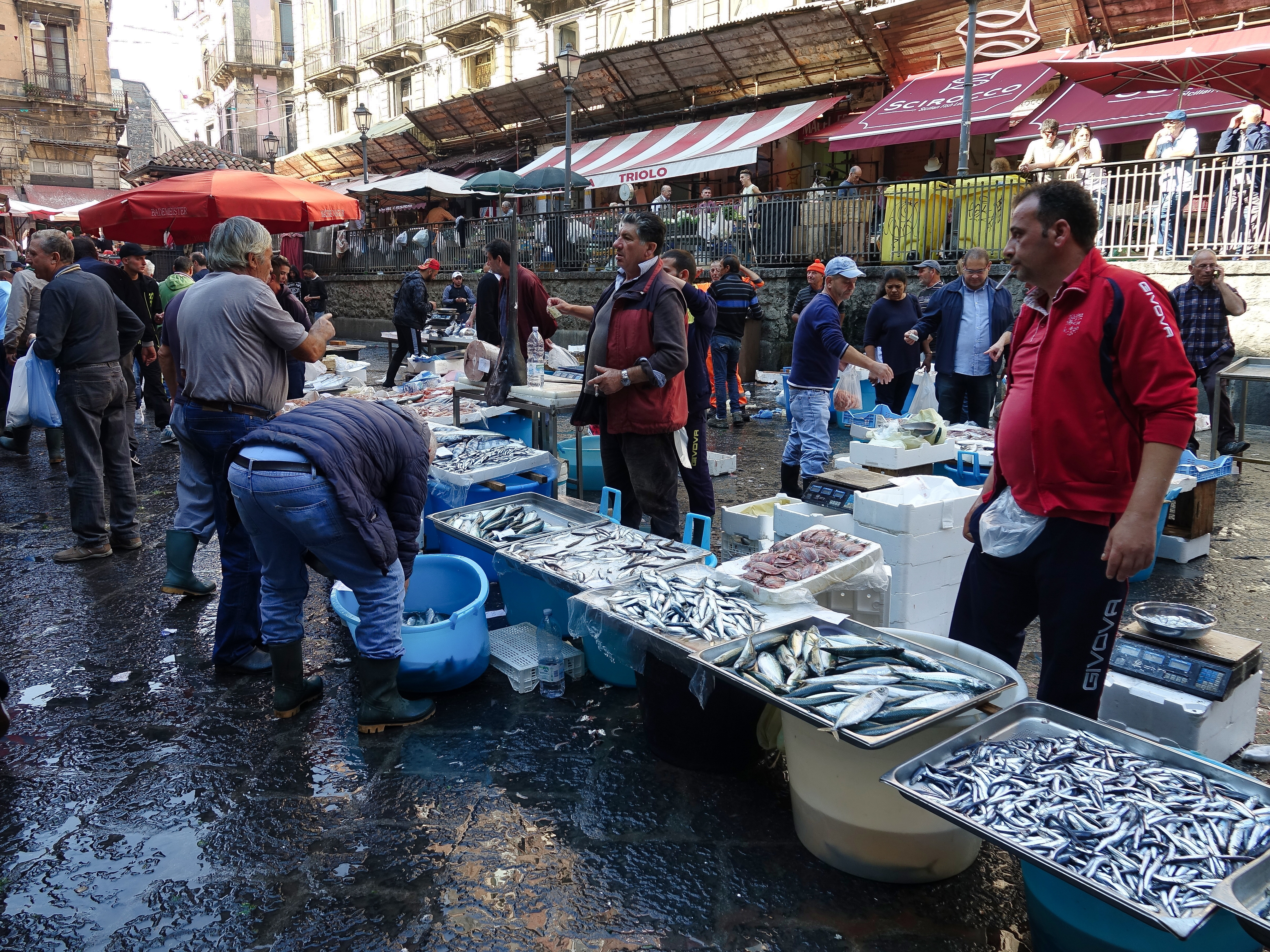 Sardines and anchovies were very popular and cheap