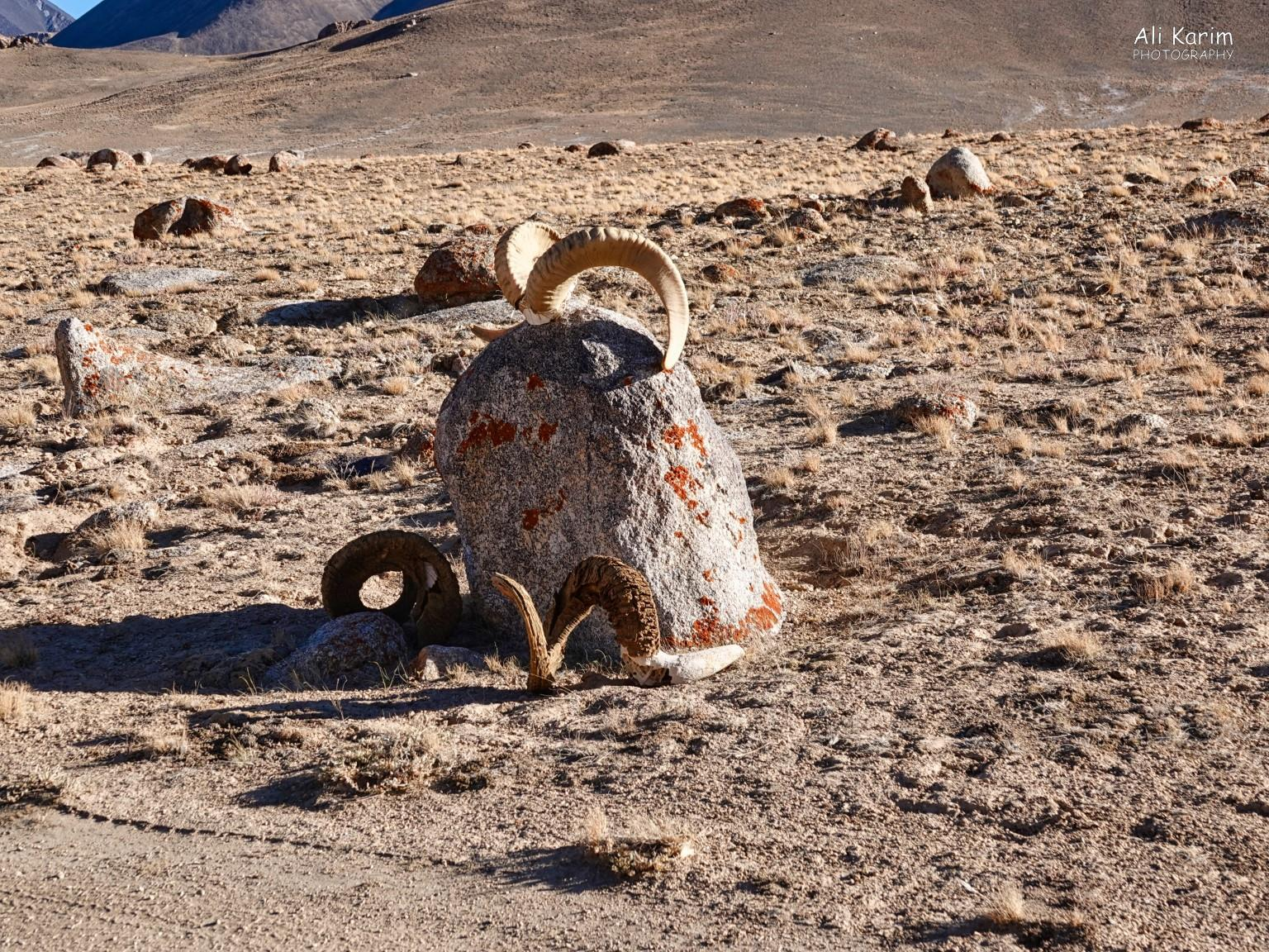 More Murghab & Alichur, Tajikistan, Occasionally, we would come across some kind of marker with Marco Polo sheep horns