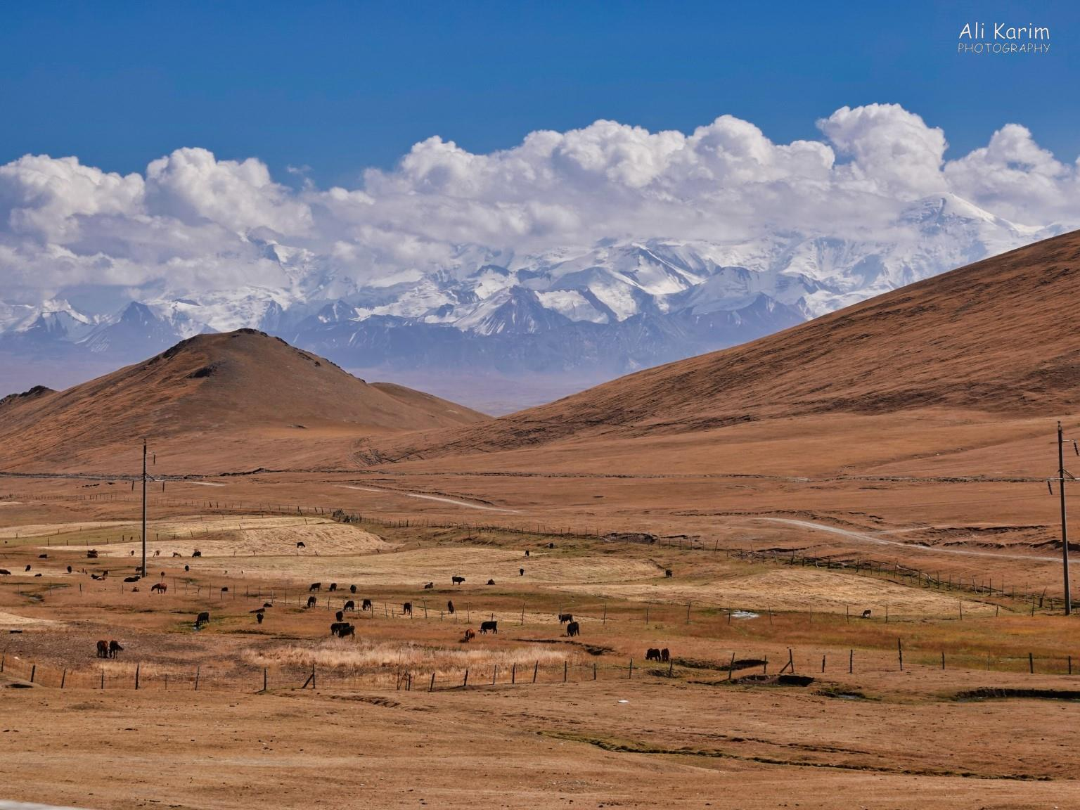 Silk Road 16: More Osh, Kyrgyzstan More remote nomadic living, snow-capped Alay mountains looming behind