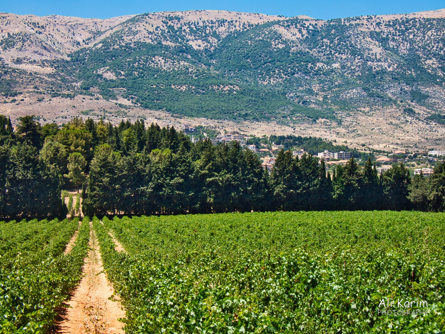 Bekaa Valley Winery, Chouf Mountains & the Druze Vines of Chateau Kefraya and the Lebanon Mountains