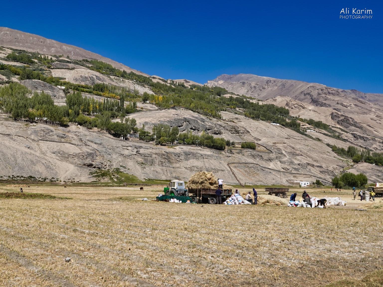 Langar, Bulunkul Tajikistan, More farming scenes
